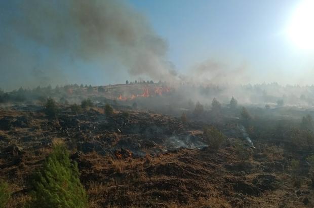 Gaziantep'te orman yangınında 2 hektarlık alan zarar gördü