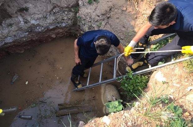 3 metrelik çukurda mahsur kalan köpek ve koyunu itfaiye kurtardı