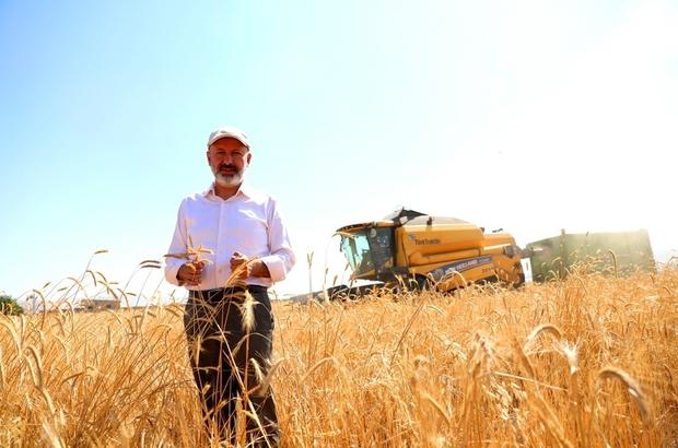 Kocasinan'da 10 bin yıllık Siyez Buğdayının hasadı yapıldı