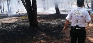 Örtü yangını ağaçlara sıçramadan söndürüldü