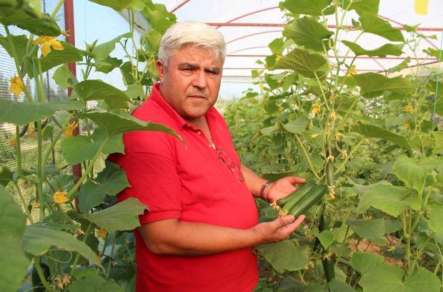 Fransa'da gördü, Alaşehir'de uyguladı Fransa'dan Türkiye'ye kesin dönüş yapan terzi, memleketi Manisa'nın Alaşehir ilçesinde seracılık yapmaya başladı