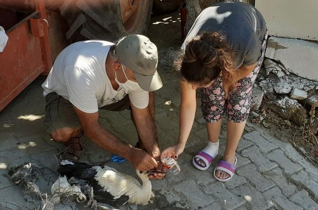 Leylek dostu Avşar Mahallesi'nde yaralı leylek için seferberlik