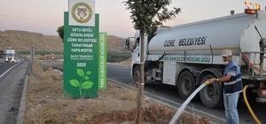 Cizre'de ağaçlar düzenli olarak sulanıyor