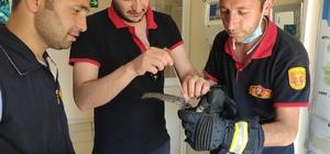 Kanatlarına uçurtma ipi dolanan ebabil kuşu kurtarıldı