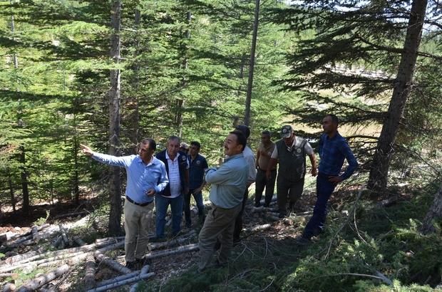 Bölge Müdürü Akduman, Erdemli ağaçlandırma sahalarını inceledi