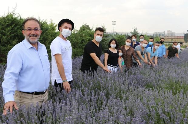 """Parasızlıktan lavanta üretimine başlayan belediye 2 milyon lira gelir bekliyor Kahramanmaraş'ın Afşin ilçesinde Belediye Başkanı Mehmet Fatih Güven'in 6 yıl önce evinde 15 saksıya dikip öncülük ettiği lavanta üretiminde şimdi yüzler gülüyor Afşin Belediye Başkanı Mehmet Fatih Güven: """"15 saksı ile başladık, 380 dekar alanda ekimimiz oldu"""""""