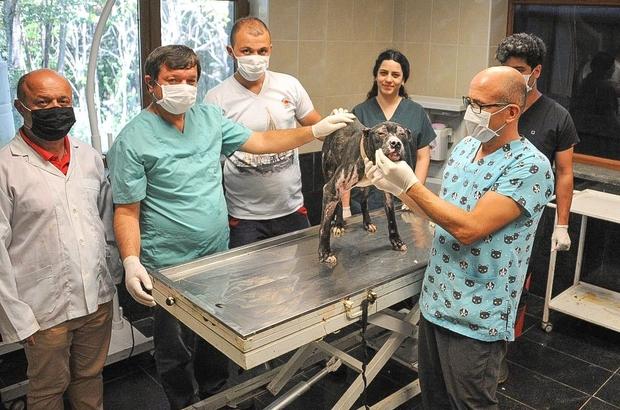 Alevler içinden çıkartılan köpek iyileşiyor