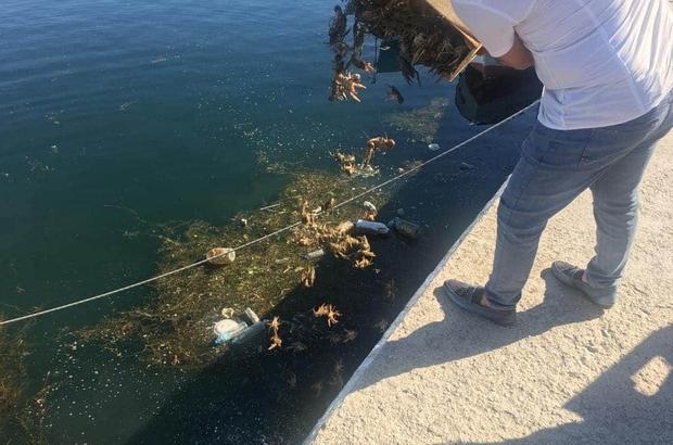 Kaçak avlanan kerevitler Eğirdir Gölü'ne salındı