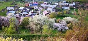 Ardahan'ın ilçelerinde Müftü, Posof'un köylerinde imam yok