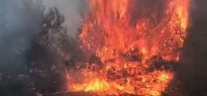 Orman yangını korkuttu