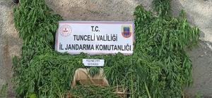 Tunceli'de uyuşturucu ile mücadele