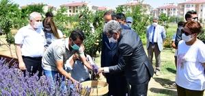 Vali Bilmez, lavanta hasadına katıldı Van'da '1. Tıbbi ve aromatik Bitkiler Hasat Bayramı' programı düzenlendi