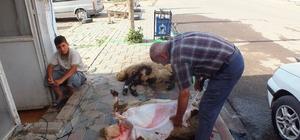 Malazgirtli iş adamından kurban eti dağıtımı