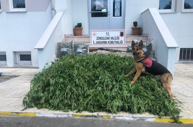 Zonguldak'ta uyuşturucu operasyonu: 1 gözaltı