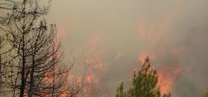 Dumandan etkilenen görevli canı pahasına alevlerle mücadele ediyor Uşak'taki orman yangını yaklaşık 5 saattir kontrol altına alınmaya çalışılıyor