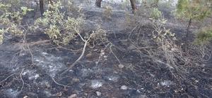 Uşak'taki orman yangınları kontrol atına alındı