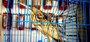 Esnafın duyarlılığı Balaban kuşunun hayatını kurtardı Yolda yaralı olarak bulduğu Balaban kuşunu milli park görevlilerine teslim etti