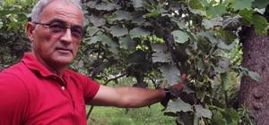 Fındık üreticisine emanete fındık verme uyarısı Giresun Ziraat Odaları İl Koordinasyon Kurulu Başkanı Abdullah Şahin, fındık hasadının başlayacağı bu günlerde üreticiyi emanete fındık vermeme konusunda uyarılarda bulundu