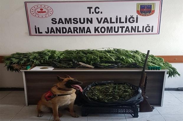 """Uyuşturucu tacirleri """"Ozon""""u geçemiyor Samsun'da 55 kilo kubar esrar ele geçirildi"""