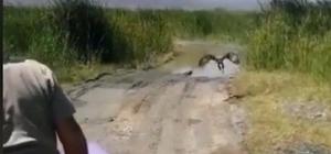 Iğdır'da bakımı ve beslenmesi yapılan kızıl şahin doğaya bırakıldı