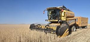 Ahlat'ta 70 bin ton buğday hasadı bekleniyor Bu yıl Toprak Mahsulleri Ofisi dışında Türk Şeker ve Tarım Kredi Kooperatifleri de buğday alımı yapacak