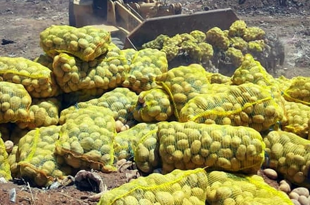 25 Ton patates imha edildi