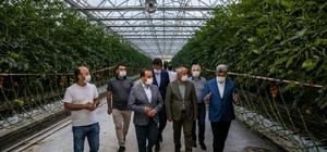 Van'dan Antalya'ya domates Türkiye'de kışı en sert geçen Çaldıran'daki seralarda üretilen domatesler tırlarla Antalya'ya gönderildi