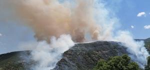 """Elazığ'daki orman yangını kontrol altına alınmaya çalışılıyor Orman Bölge Müdürü Çetiner: """"Yangın 2 noktada ilerliyor. 1 nokta kontrol altına alındı"""""""