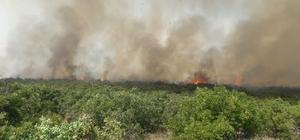 Elazığ'daki orman yangını kontrol altına alındı Elazığ'da 100 dönüm ormanlık alanın zarar gördüğü yangın kontrol altına alındı