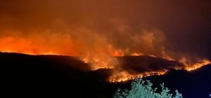 Bulgaristan'daki orman yangını Türkiye sınırına ulaştı Alevler 30 kilometre uzunluğa yayıldı