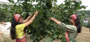 Trabzon'da 61 bin 661 çiftçi fındık yetiştiriciliği yapıyor