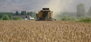 Hububat üreten çiftçilerden Muş ekonomisine 1 milyar TL katkı