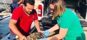 Yaralı careta carettayı sahil güvenlik kurtardı