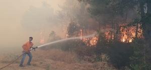 Sakarya'da orman yangını Bölgeye çok sayıda itfaiye ekibi ve yangın söndürme helikopteri sevk edildi Yangının evlere sıçramaması için çaba veriliyor