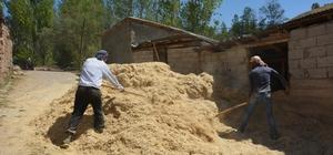 Tercan'da kışlık saman hazırlıkları sürüyor