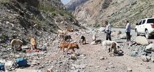 Hakkari'de sahipsiz hayvanlara yiyecek bırakıldı