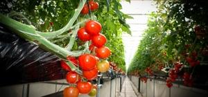 Eskişehir'de sağlıklı ve güvenilir sebze üretimi Hasat öncesi dönemde numuneler alınarak analizleri yapılıyor
