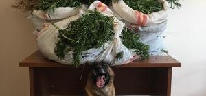 Mutki'de 41 kilo 316 gram kubar esrar ele geçirildi
