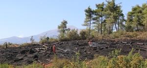 Suriye sınır hattında orman yangını