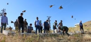 Siirt'te doğaya 750 kınalı keklik bırakıldı