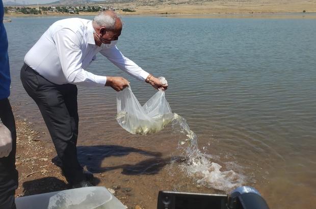 Elazığ'da Kalecik Barajı'na 5 bin sazan yavrusu bırakıldı