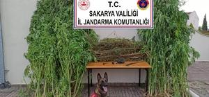 Sakarya'da 14 günde 29 kilo 85 gram kubar esrar ele geçirildi Gözaltına alınan 14 şahıs hakim karşısına çıkarıldı