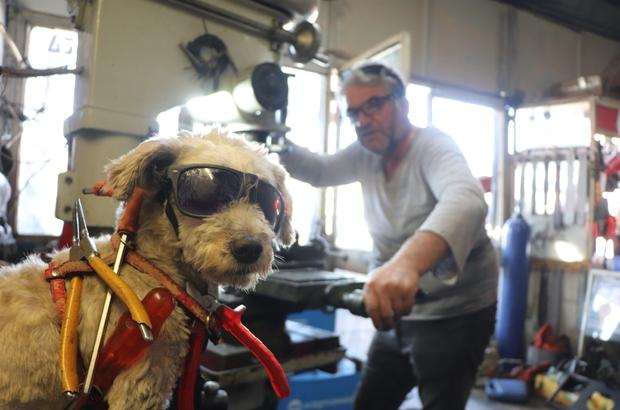 40 yıllık motor ustasının en büyük yardımcısı 'Kafe' isimli köpeği Kafe, ustasına adeta çıraklık yapıyor Hayvansever motor ustası elleriyle karga besliyor, köpeğiyle motorda geziyor
