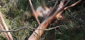 Üzerine ağaç devrilen işçi hayatını kaybetti