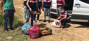 Bingöl'de jandarma, Covid-19 hastasının bahçesinde hasat yaptı