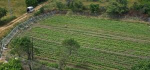 """Bolu'da, 2 bin 300 metrekarelik alana """"Ata tohumları"""" ekildi Yıllardır saklanan """"Ata tohumları""""ndan 10 çeşit ürün yetişecek"""