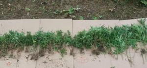 Bartın merkezli 4 ilde uyuşturucu operasyonu Operasyonda gözaltına alınan 13 kişiden 4'ü tutuklandı