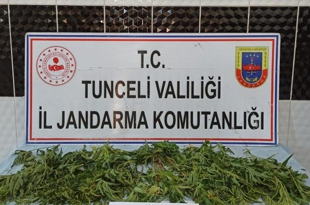 Tunceli'de uyuşturucuyla mücadele