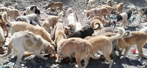 Hakkari'de sokak hayvanlarına şefkat eli