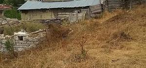 Bolu'da çıkan yangında ev, ahır ve samanlık alev alev yandı